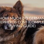 How Much Do German Shepherds Cost (Complete Buying Guide)