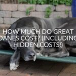 How Much Do Great Danes Cost? (Including Hidden Costs!)