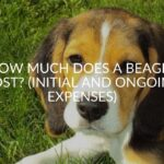 How Much Does A Beagle Cost? (Initial And Ongoing Expenses)