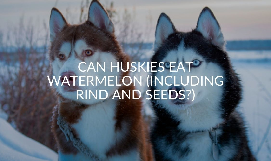 Can Huskies Eat Watermelon (Including Rind And Seeds_)