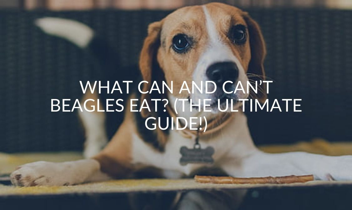 What Can And Can't Beagles Eat_ (The Ultimate Guide!)