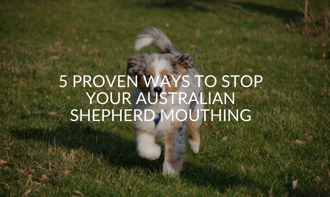 5 Proven Ways To Stop Your Australian Shepherd Mouthing