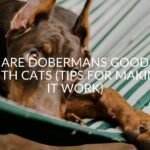 Are Dobermans Good With Cats (Tips For Making It Work)