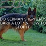 Do German Shepherds Bark A Lot? (& How To Stop It)