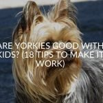 Are Yorkies Good With Kids? (18 Tips To Make It Work)