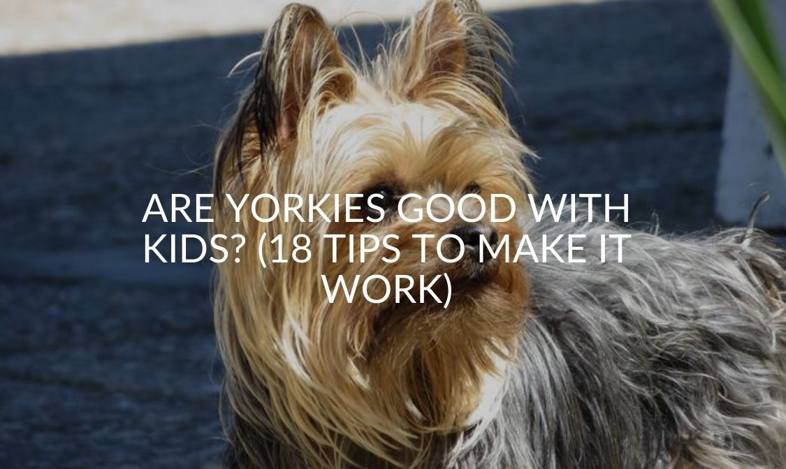 Are Yorkies Good With Kids (18 Tips To Make It Work)