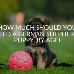 How Much Should You Feed A German Shepherd Puppy (By Age)