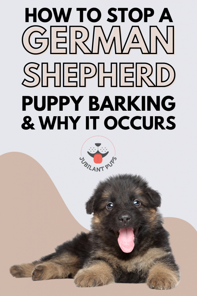 german shepherd puppy barking and why it occurs