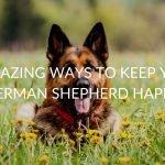 9 Amazing Ways To Keep Your German Shepherd Happy
