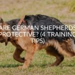 Are German Shepherds Protective? (4 Training Tips)
