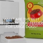 What Are The Best Automatic Dog Feeders For Large Dogs?