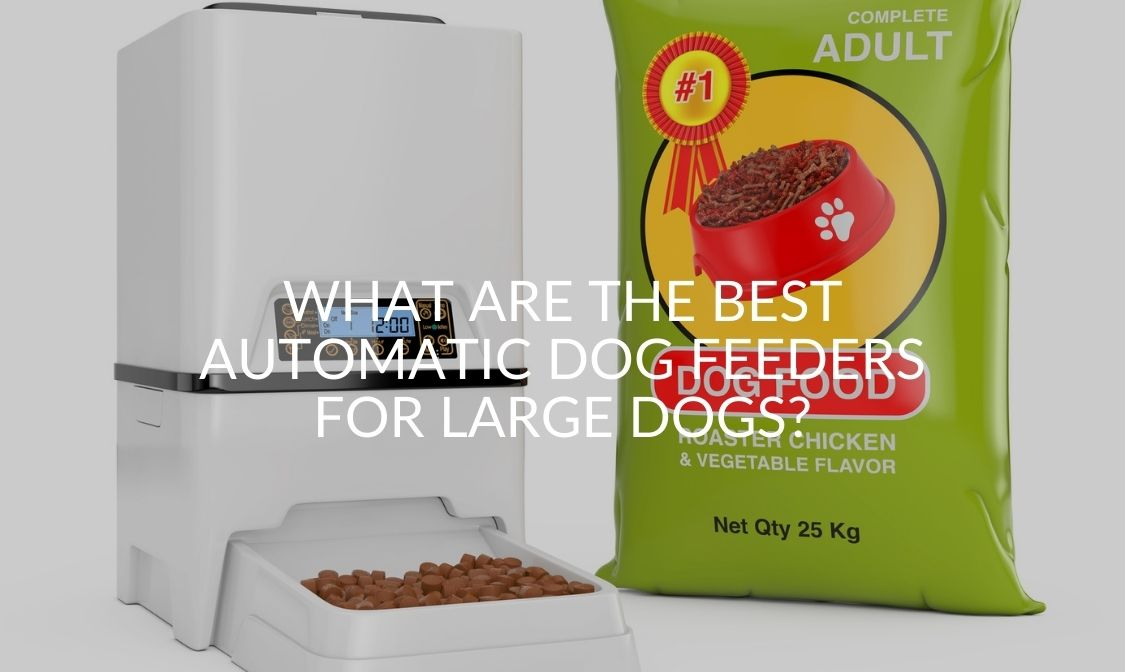 What Are The Best Automatic Dog Feeders For Large Dogs