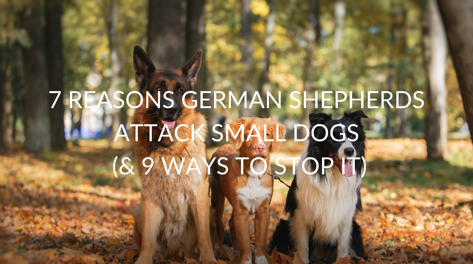 7 Reasons German Shepherds Attack Small Dogs (& 9 Ways To Stop It)